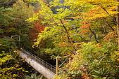 日本東北賞楓上:DSC08096-.jpg