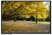 基督城海格利公園:DSC07840~.jpg