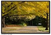 基督城海格利公園:DSC07847~.jpg