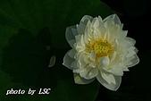 2007戀戀白荷:DSC04130