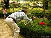 花中之王牡丹花-驚豔杉林溪:PICT3319+.JPG