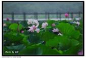 雨的旋律--白河荷花: