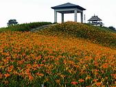 六十石山金針花:照片 232p.jpg