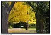 基督城海格利公園:DSC07861~.jpg