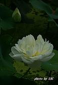 2007戀戀白荷:DSC04172