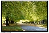 基督城海格利公園:DSC06702~.jpg