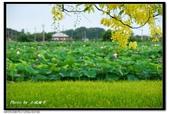 白河阿勃勒:DSC_4295.jpg