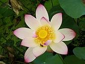 蓮荷風情:六甲蓮花世界荷蓮
