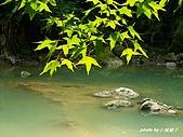 花中之王牡丹花-驚豔杉林溪:PICT3071+.JPG