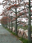 2005台灣詩路木棉花:木棉道與雲牆