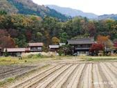 合掌村與金澤城:DSC_2808白川鄉合掌村p.jpg