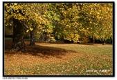 基督城海格利公園:DSC07777~.jpg