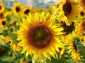 南台灣的小太陽:搶鏡頭