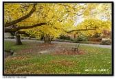 基督城海格利公園:DSC07786~.jpg