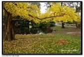 基督城海格利公園:DSC07793~.jpg