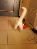 小白貓跑進我房間:1138843489.jpg