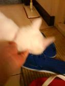 小白貓跑進我房間:1138843485.jpg
