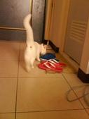 小白貓跑進我房間:1138843487.jpg
