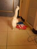 小白貓跑進我房間:1138843488.jpg
