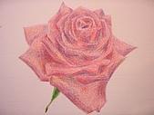 我的色鉛筆畫~初級班:玫瑰花
