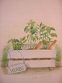 我的色鉛筆畫~初級班:小小的花圃