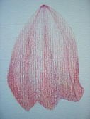 我的色鉛筆畫~初級班:小菊花的花瓣
