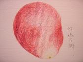 我的色鉛筆畫~初級班:玫瑰花的花瓣