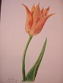 我的色鉛筆畫~初級班:不知名的花