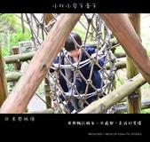 2013東勢林場賞螢趣,油桐花與螢火蟲共舞:nEO_IMG_20130413 133.jpg