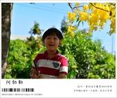 阿勃勒,台南賞花地點公開,初夏最金黃耀眼的綻放:nEO_IMG_20130602 212.jpg