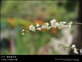 賞梅。臺中新社 梅林親水岸:nEO_IMG_20120115 013.jpg