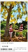 阿勃勒,台南賞花地點公開,初夏最金黃耀眼的綻放:nEO_IMG_20130602 264.jpg