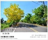 阿勃勒,台南賞花地點公開,初夏最金黃耀眼的綻放:nEO_IMG_20130602 070.jpg
