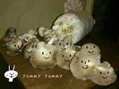 我們在家種香菇~秀珍菇的成長過程:03.jpg