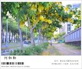 阿勃勒,台南賞花地點公開,初夏最金黃耀眼的綻放:nEO_IMG_20130602 1203.jpg