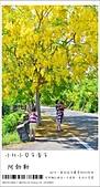 阿勃勒,台南賞花地點公開,初夏最金黃耀眼的綻放:nEO_IMG_20130602 072.jpg