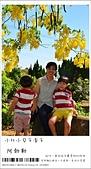 阿勃勒,台南賞花地點公開,初夏最金黃耀眼的綻放:nEO_IMG_20130602 265.jpg