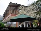 賞梅。臺中新社 梅林親水岸:nEO_IMG_20120115 014.jpg
