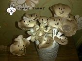 我們在家種香菇~秀珍菇的成長過程:02.jpg