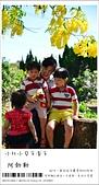 阿勃勒,台南賞花地點公開,初夏最金黃耀眼的綻放:nEO_IMG_20130602 268.jpg