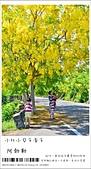 阿勃勒,台南賞花地點公開,初夏最金黃耀眼的綻放:nEO_IMG_20130602 073.jpg