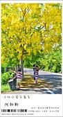 阿勃勒,台南賞花地點公開,初夏最金黃耀眼的綻放:nEO_IMG_20130602 074.jpg