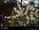 賞梅。臺中新社 梅林親水岸:nEO_IMG_20120115 015.jpg