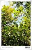 桃源谷大草原,享受大草原和山脊稜線風光:nEO_IMG_20121110 013.jpg