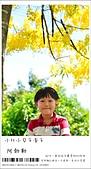 阿勃勒,台南賞花地點公開,初夏最金黃耀眼的綻放:nEO_IMG_20130602 223.jpg