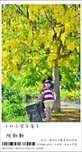 阿勃勒,台南賞花地點公開,初夏最金黃耀眼的綻放:nEO_IMG_20130602 082.jpg