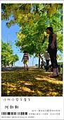 阿勃勒,台南賞花地點公開,初夏最金黃耀眼的綻放:nEO_IMG_20130602 193.jpg