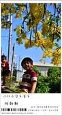 阿勃勒,台南賞花地點公開,初夏最金黃耀眼的綻放:nEO_IMG_20130602 112.jpg