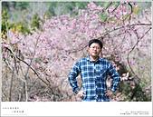 2016武陵賞櫻:nEO_IMG_315.jpg