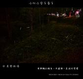 2013東勢林場賞螢趣,油桐花與螢火蟲共舞:nEO_IMG_20130413 350.jpg
